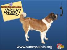 Become a Sunny Saints Foster